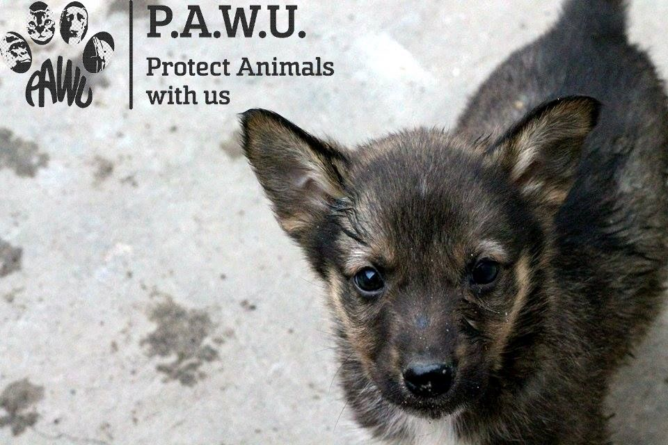 Protect Animals With Us