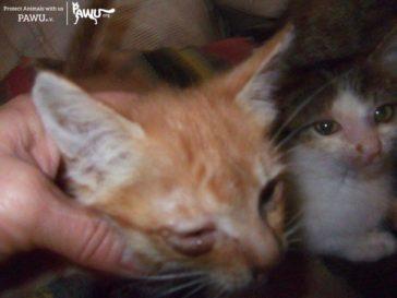 7 Katzenbabys brauchen Hilfe -Update