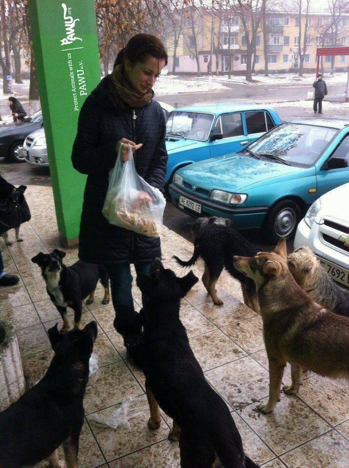strays-feeding