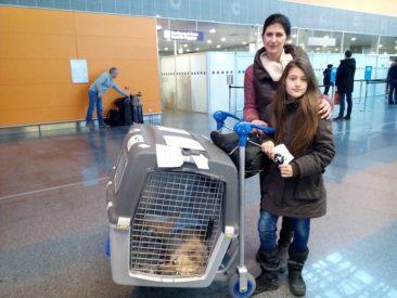 Hündin Jessy, die als Welpe halbtot von Volontären gefunden wurde, wird von der Ukraine nach Italien geflogen.
