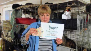Spendenübergabe im Katzenheim Kiew