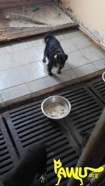 Besuch im städtischen Tierheim Borodianka