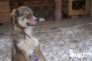 Spendenübergabe Tierheim Sirius 11.02.2015