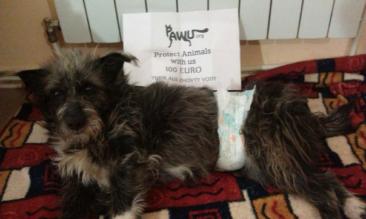 Spendenübergabe für Tusik aus Zhovti Vody / Ukraine!