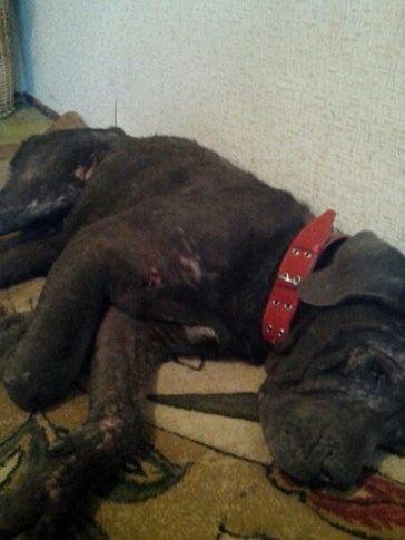 Update angeschossener Hund Tierheim Gorlovka !