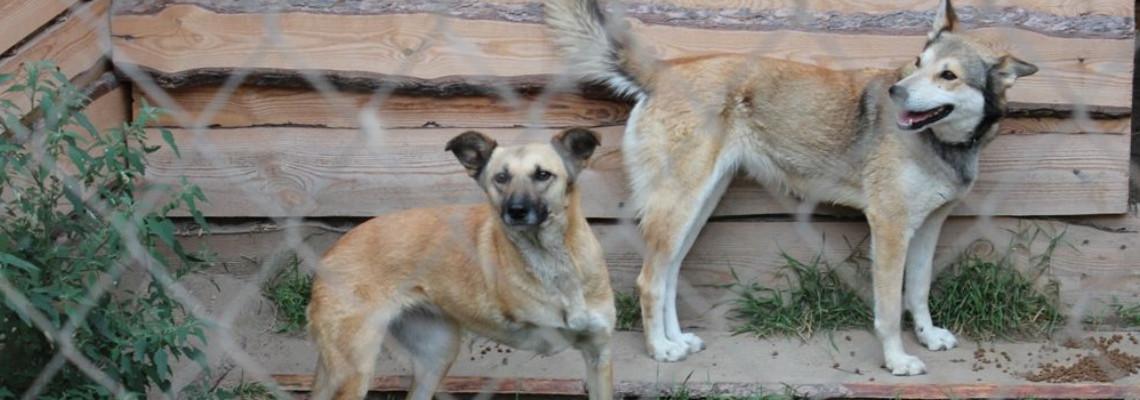 Tierschutzorganisation Zhovti Vody - Ukraine