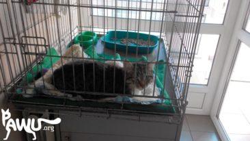 Futter für Tierklinik in Kiew