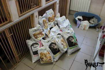 Spendenübergabe Tierklinik Kiew