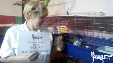 Soforthilfe für Katzenheim Kiew
