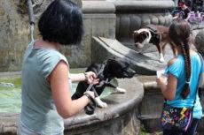 Hund ist Hund 2015 Köln