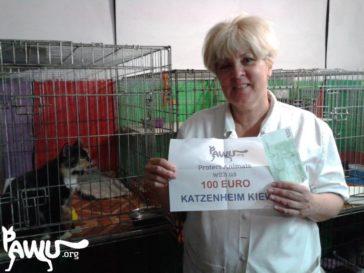Hilferuf aus dem Katzentierheim in Kiew