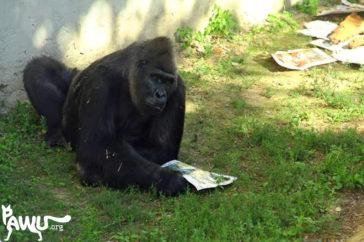 Toni – Zoo – Kiew