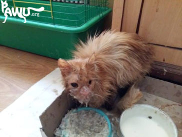 Urgent supporters for abused cat wanted!
