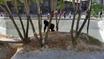 Gorilla Toni – Live Zoo Kiew
