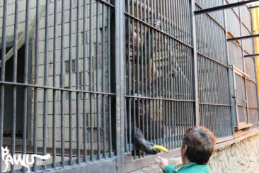 Zoo – Kiew 28.09.2015