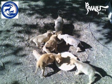 Hilfe für Tiere in Zhovti Vody in der Ukraine