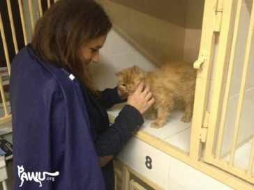 Besuch bei Lina, der misshandelten Katze