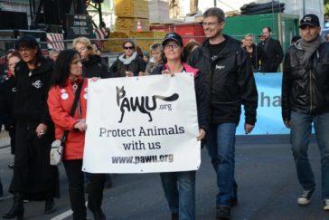 Aktionstag für die Straßentiere