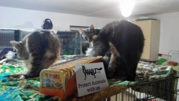 Besuch im Katzenheim in Kiew