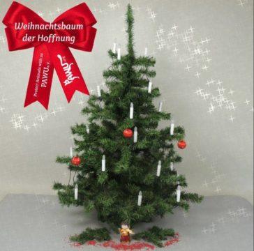 Weihnachtsbaum der Hoffnung – Unsere Weihnachtsaktion