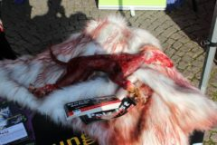 Aktionstag für Straßentiere