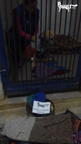 Strickpullis für die Tierklinik in Kiew