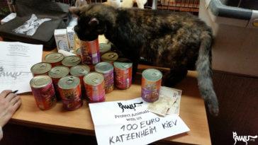 Übergabe – Katzenheim Kiew