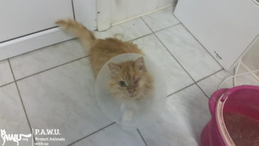Liebe Grüße von Katze Lina