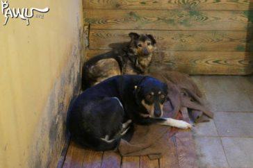 Tierheim in Borodianka 50 km von Kiew braucht dringend Hilfe!