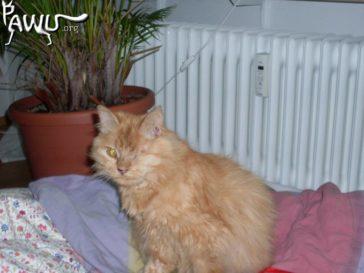 Misshandelte Katze Lina aus der Klinik in Kiew