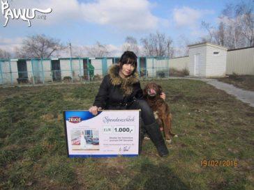 Hilfe für Tierheim Pif im Kriegsgebiet / Ukraine