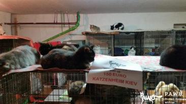 Hilfe für das Katzenheim Kiew