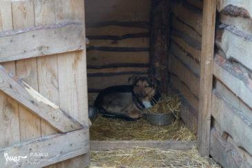Übergabe Tierheim Sirius / Ukraine