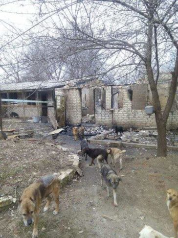 Feuer im Tierheim Gorlovka, im Kriegsgebiet der Ukraine!!!