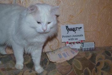 Hilfe für das Katzenheim in Kiew