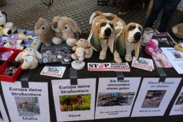 Straßentiere - wir kümmern uns!