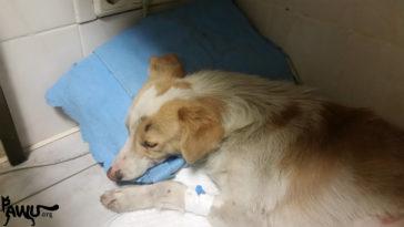 Angefahrener Hund gerettet!
