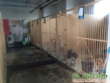 Die städtische Tierklinik in Kiew braucht Hilfe!