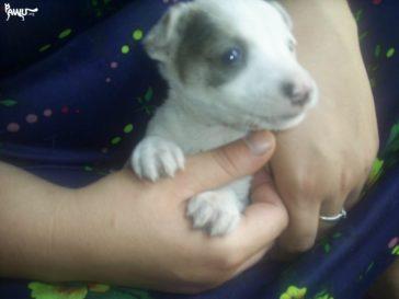 Das Tierheim Dimitrov im Kriegsgebiet der Ukraine braucht dringend Hilfe!!!
