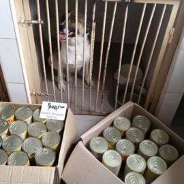Futter für die Straßenhunde in der städtischen Tierklinik Kiew