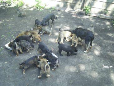 100 Euro für das Tierheim Dimitrov