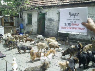 100 Euro für das Tierheim Dimitrov im Kriegsgebiet der Ukraine