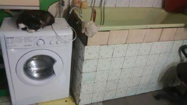 Katzenheim in Kiew in  großer Not!