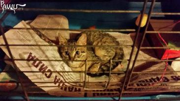 Spendenübergabe Katzenheim Kiew