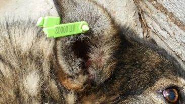 Medikamente für das Tierheim Borodianka