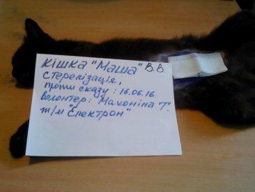 Die Kastrationen in Zhovty Wody gehen weiter