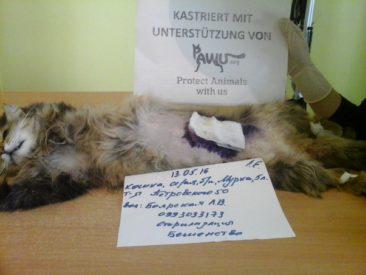 Kastrationen in der Stadt Zhovty Wody