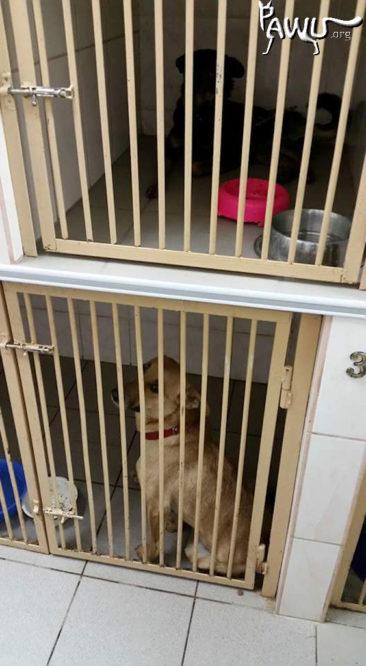 Futter für die Straßenhunde in der städtischen Tierklinik Kiew.