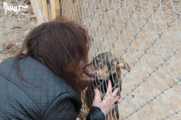 Video – Tierheim Sirius – Kiew / Ukraine