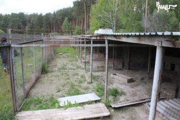 Tierheim Borodianka 08.05.16 -01